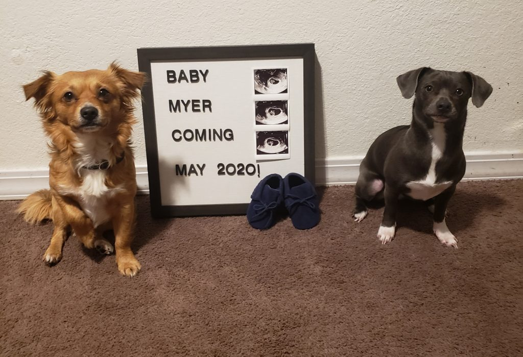 use your dog for your pregnancy announcement